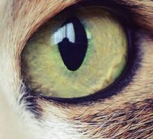 Eye of a cat Sticker