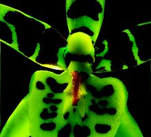 Storm Trooper - Orchid Alien Discovery by ©Ashley Edmonds Cooke