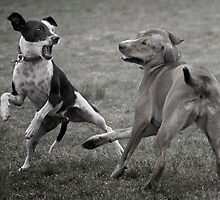 Dogs with game face on .10 by Alex Preiss