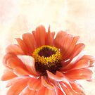 Zinnia Bright by LouiseK