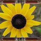 Black-Eyed Susan..Framed! by MaeBelle