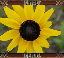 Black-Eyed Susan..Framed! by MaeBelle