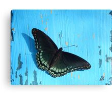 Fashionable Butterflies I Canvas Print