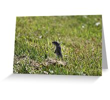 Squinny...blink and you miss them! Greeting Card
