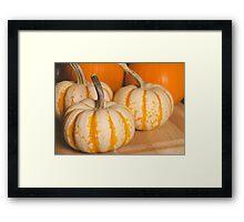 Pumpkins 7 Framed Print