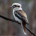The Kookaburra by Rick Playle