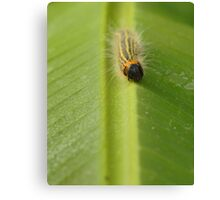 Bright Caterpillar Against Green Canvas Print