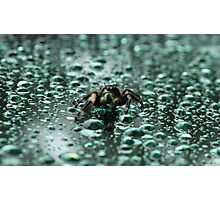 Spider in the Rain Photographic Print