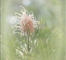 Grevillea in Pastel by Elaine Teague