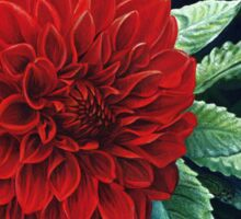 Large Red Dahlia Flower, painting Sticker