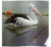Pensive Pelican Poster