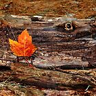 """I See you"" said the Log to the Leaf... by Poete100"