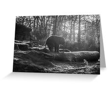 Little Elephant Black And White Photography #redbubble #decor Greeting Card