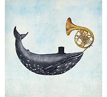 Whale Song  Photographic Print