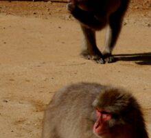 kyoto monkeys Sticker