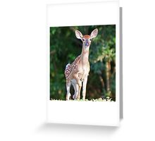 A young white tailed deer Greeting Card