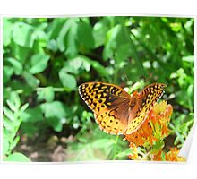 Be Free Butterfly Poster