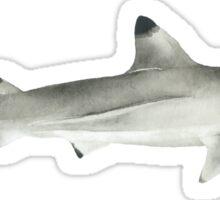 Blacktip Shark Sticker