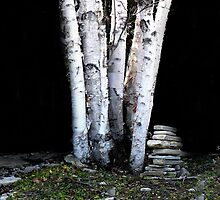 Land of the Silver Birch by Rosemary Sobiera