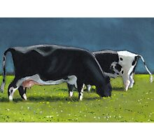 Holstein Dairy Cows Grazing, Oil Pastel Painting, Farm Photographic Print
