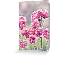Plant Me Pink Roses Greeting Card