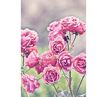 Plant Me Pink Roses Photographic Print