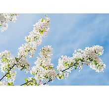 Frühlings Tage Photographic Print