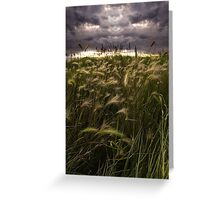 Prairie Grasses Northeastern Colorado Greeting Card
