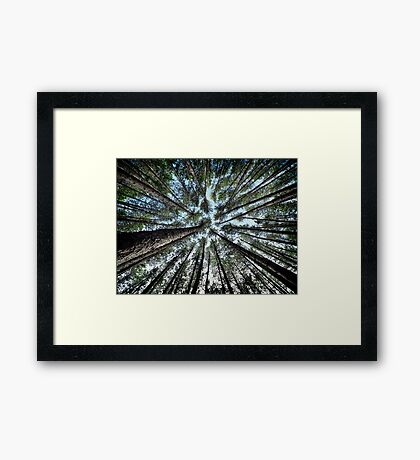 Tree tops of pine forest art photo print Framed Print