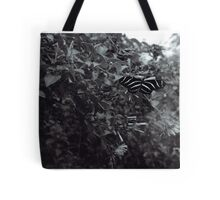 Zebra Butterfly in B&W Tote Bag