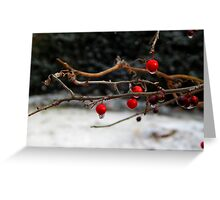 Frozen Holly Berries Greeting Card