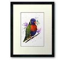 Watercolor Lorikeet at the Pet Store Framed Print