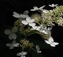 White Flower and Bee Illuminate by IveyRose