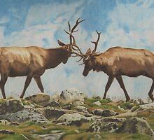 Elk Bulls Fighting by Vknoll