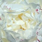 Love ~ This White Peony by SummerJade