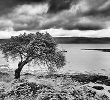 Tree on the Coast by Kasia-D