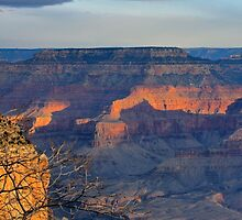 Canyon Evening by Harry Oldmeadow