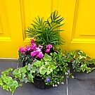 Flowers against a Yellow Door by Shulie1