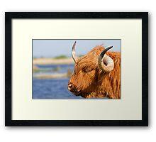 Highland Cattle in Oare Marshes, Kent Framed Print