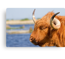Highland Cattle in Oare Marshes, Kent Canvas Print