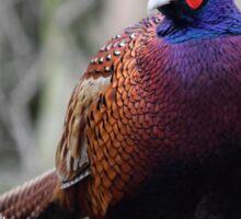 Pheasant in woodland. Sticker