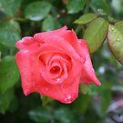 My Sweet Rose by Cherie Balowski