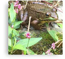 Frog and flower Canvas Print