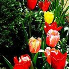 Spring Tulips by sandysartstudio