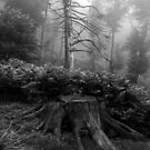 Foggy day I. by jimmylu