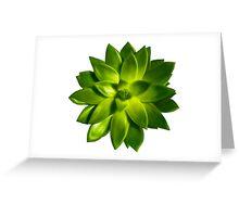 MINI GREEN SUCCULENT MANDALA Greeting Card