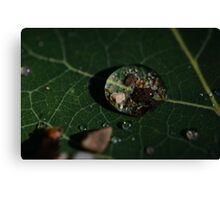 MacroDeisgn Water Droplet Canvas Print