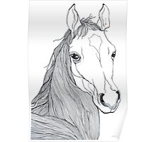 Horse face pen drawing Poster