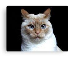 What Are You Lookin' At? Canvas Print