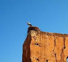 Stork Nesting, Marrakech by Ludwig Wagner